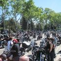 Harleys 2010 2 thumb r