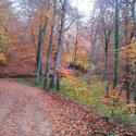 Montseny guilleries 15 thumb r
